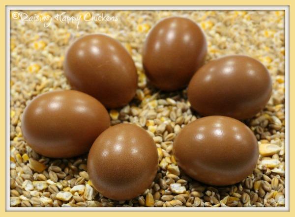 Six Marans eggs
