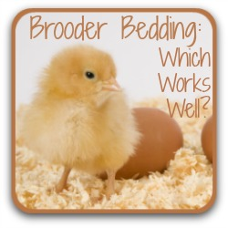 Brooder bedding: which works well for baby chicks? Link.