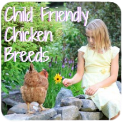 Child friendly chicken breeds link.