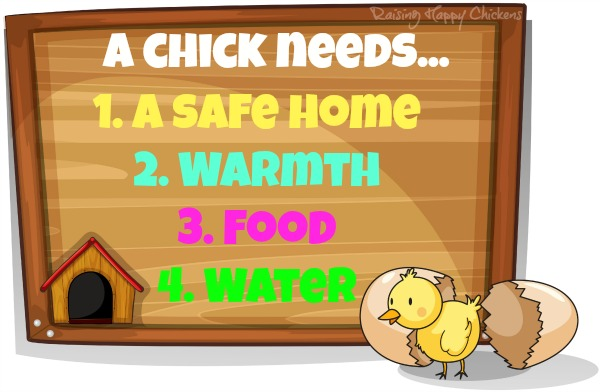 What a newly hatched chick needs : safety; warmth; food and water.