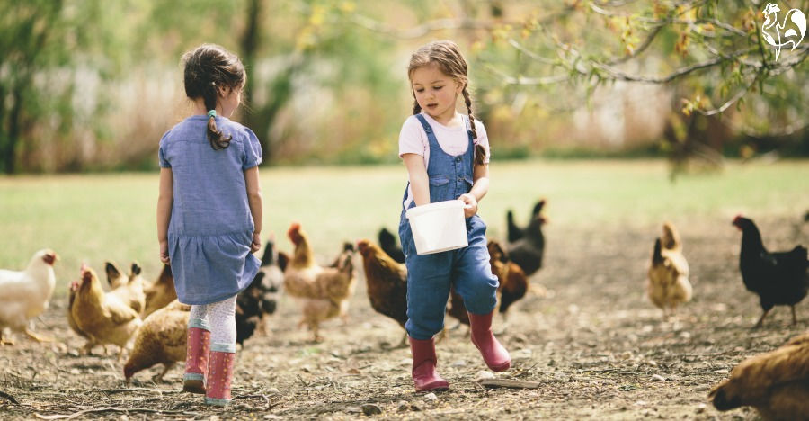 Two little girls feeding chickens.