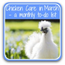 Chicken care in March - click to view article.