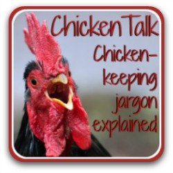 Not clear about the jargon of chicken-keeping? Here's an explanation.