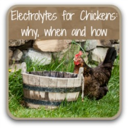 Electrolytes for chickens - what they are and how to make them. Link.