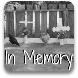 In memoriam: leave a tribute to your hen or roo. Link.