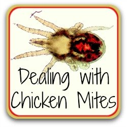 Dealing with chicken mites - link.