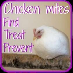 Find and prevent chicken mites - link.