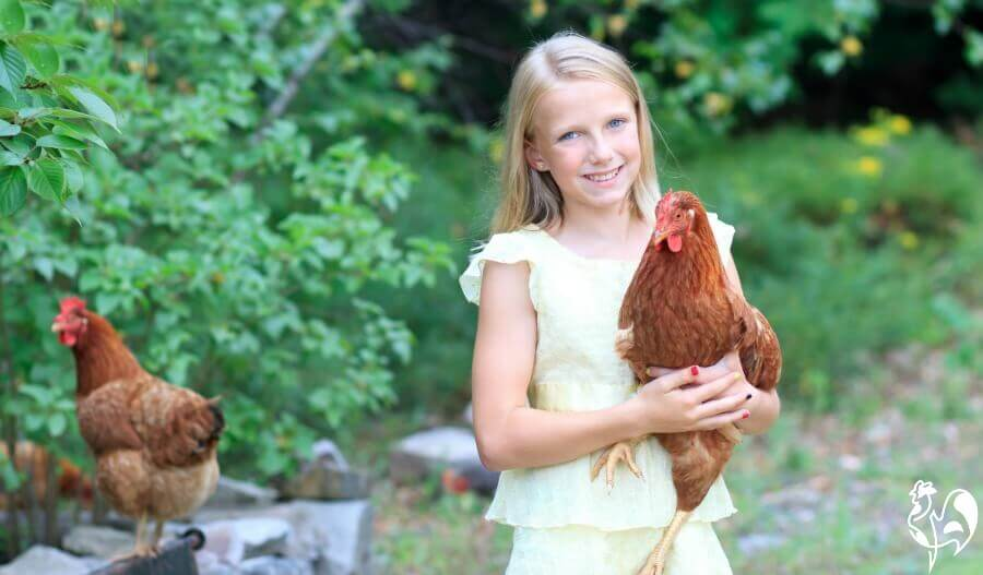 A child with a group of Red Star chickens