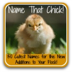 Name that chick from over 150 possibilities! Link.