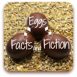 What do chickens' ears have to do with the eggs they lay?  Find out here!