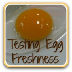 Want to know if your eggs are fresh?  We show you how to tell!