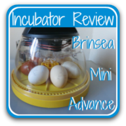 review of the Brinsea Mini Advance 7 egg incubator.