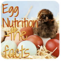Egg nutrition : the facts. Click here.