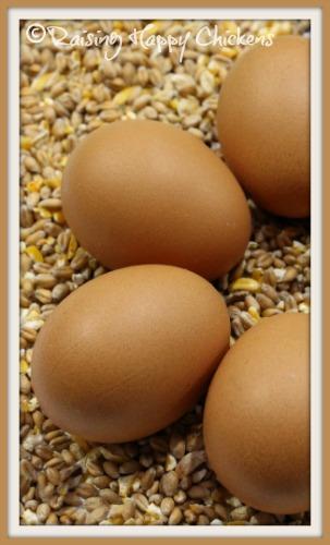 Four brown eggs