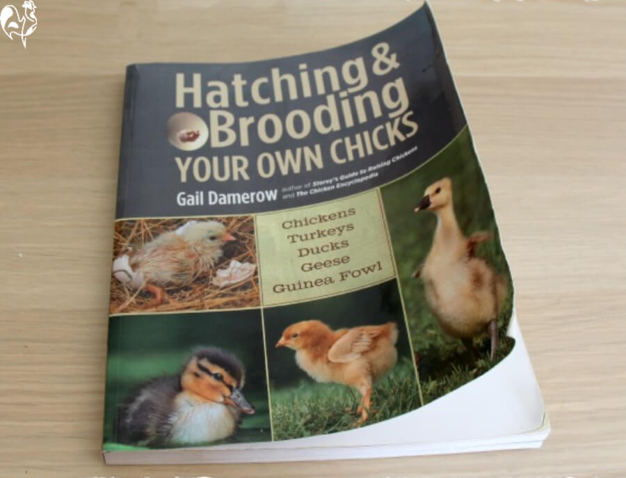 Front cover of Gail Damerow's hatching book.