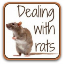 Dealing with rats on the chicken coop - link.