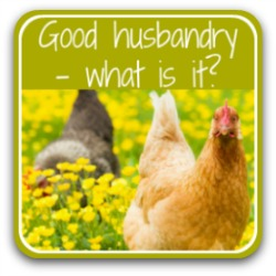 Good husbandry for chickens - what is it? Link.