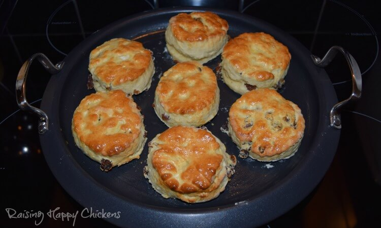 7 scones on a griddle pan.