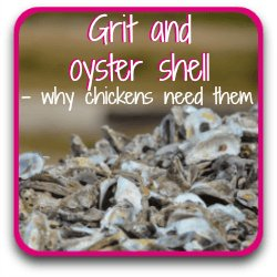 All about grit and oyster shell for chickens - link.