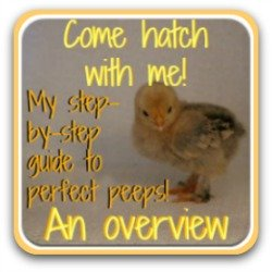 Come - hatch with me! Link to my free hatching series.