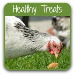 Ten healthy treats your chickens will love - click here.