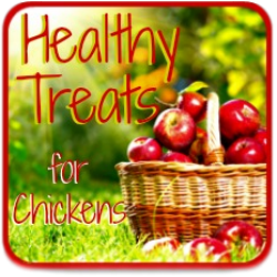 Clickable link to what treats chickens can eat in the summer months