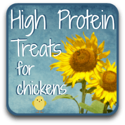 High protein foods for chickens - a link.