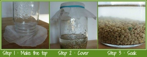 How to sprout seeds first steps