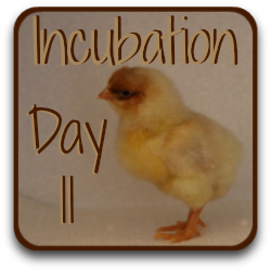 Need to look over what happened to the incubated egg yesterday? Here's a link.