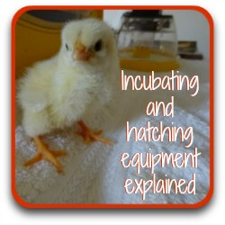 Link to information about incubating and hatching equipment.
