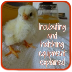 Incubating equipment: I assess the best.