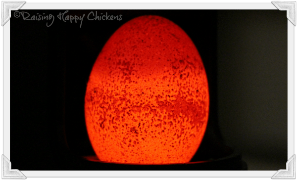 A chicken egg is shown to be too porous to hatch under a candling lamp.