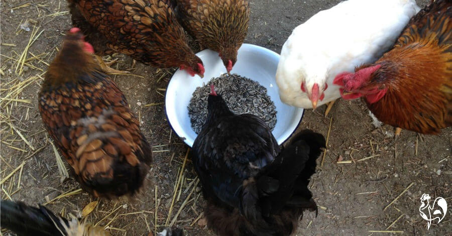 Sunflower seeds may help prevent sudden chicken death syndrome.