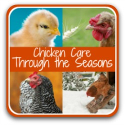 Raising Chickens, month by month tasks - link.