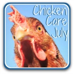 Chicken care in July - link.