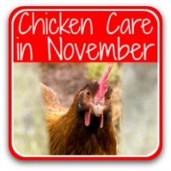 Taking care of your flock in November - link.