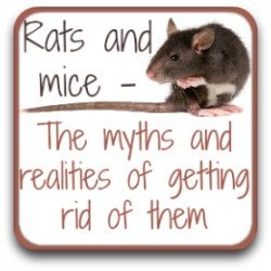 Rodents : 5 ways of getting rid of them that don't work.
