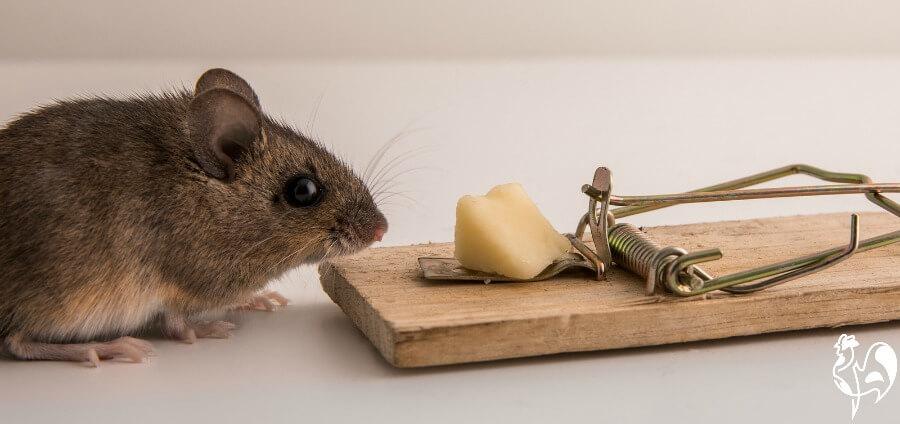 Snap rat trap