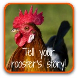 Want to tell your rooster's story? Click here!