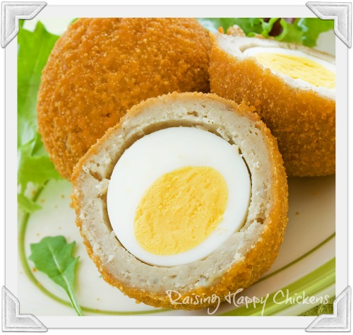 Scotch eggs in breadcrumbs