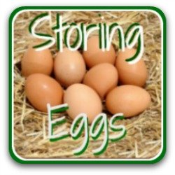 How to store fresh eggs - click here!