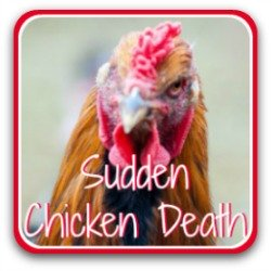 Sudden chicken death syndrome - link.
