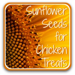 Sunflower seeds for chicken treats. Link.