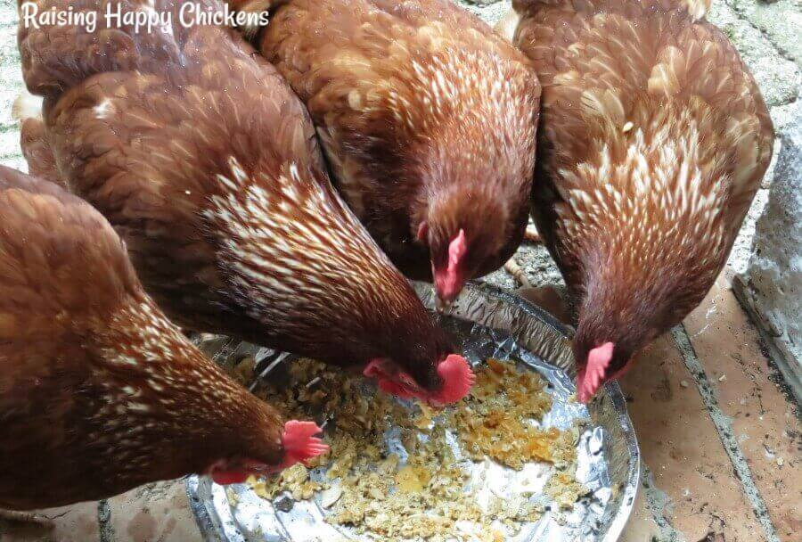 Any age of chicken eating anything other than commercial chicken feed needs to have a source of grit freely available. Pecking dirt from the ground may not be enough.